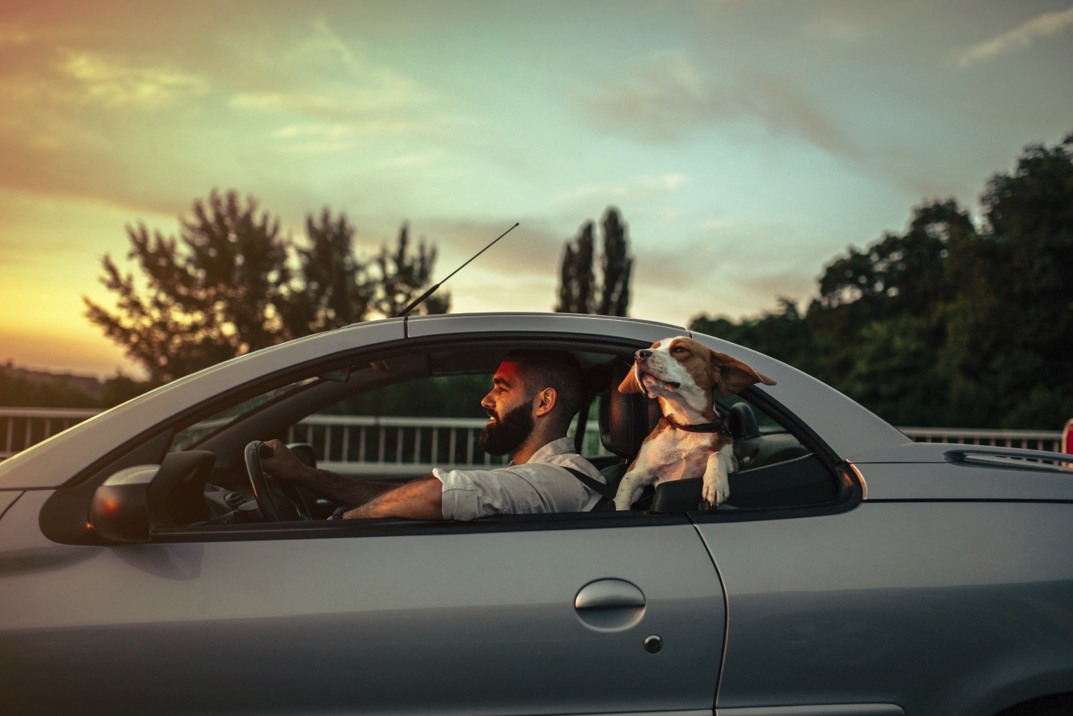 Man driving car with dog